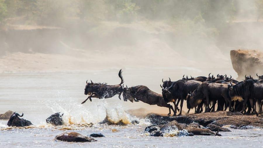 Wielka migracja - Zdjęcie Afryka